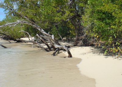 Plage de Mangrove Grand Cul de Sac marin - Guadeloupe